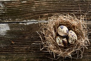 Conceptual still-life with quail eggs in hay nest over dark wooden background, close up, selective focus
