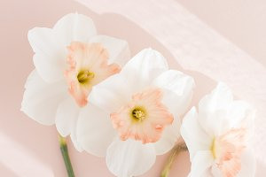 Delicate bouquet of three daffodils