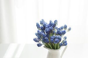 bouquet of fresh spring Muscari