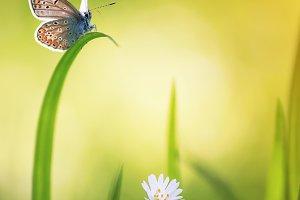 весенняя открытка с бабочкой