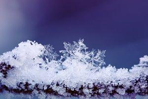 холодные красивые снежинки на ветке