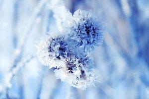колючий иней и снег покрыл растения