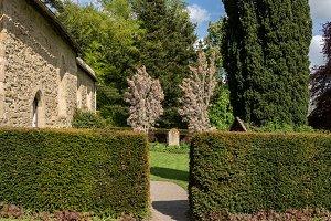 Single gravestone between two flowering trees in cemetery