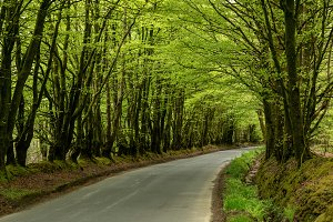Narrow road between overhanging trees forming a tunnel