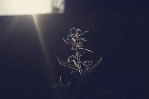Glowing sun-lit plant