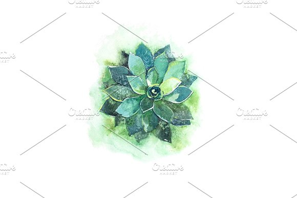 Cactus Succulent Aloe Plant Flower Watercolor Illustration