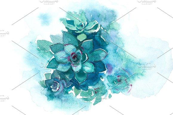 Cactus Succulent Aloe Plant Flower Watercolor Illustration