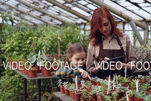 Greenhouse owner and her cute daughter are counting pot plants in workplace and working with tablet touching screen entering numbers. Family business concept.