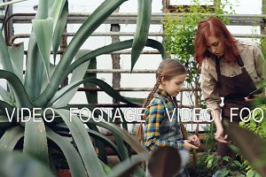 Female worker of greenhouse and her little daughter are looking at plants and touching them in hothouse, woman is holding tablet. Family and gardening concept.