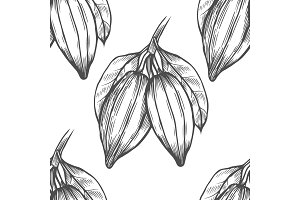 Vector Cocoa tree illustration