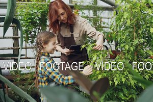 Greenhouse owner and her cute little daughter are touching leaves of small tree, talking and smiling while working in hothouse. Woman is holding tablet.