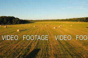 Rolls of haystacks on the field