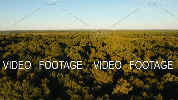 Flight Over The Green Forest