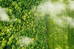 Aerial view of the forest and green field and rural road with a red car. Drone photography