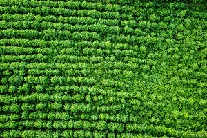 Aerial view rural field, agriculture. Natural background. Photo from the drone