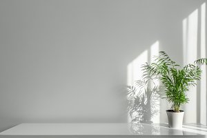 Houseplant Areca in a white pot on a table on a white wall background
