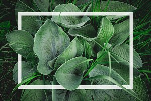 Green leaves with a white frame