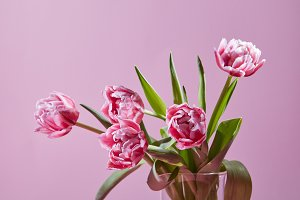 Beautiful tulips in a glass vase on a pink background.