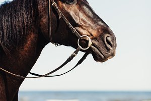 A head of wild horse on the beach in
