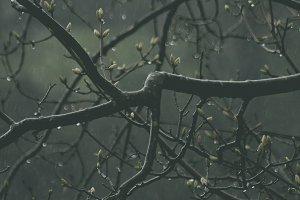 Branches in rain