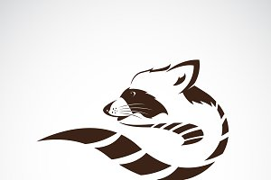 Vector of raccoon design. Animal.