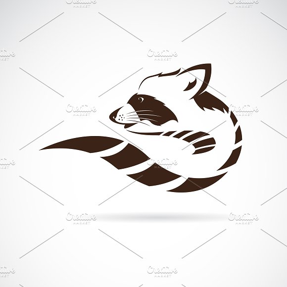 Vector Of Raccoon Design Animal