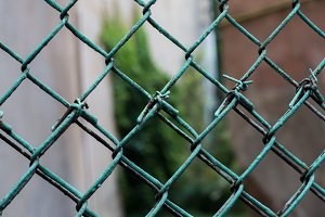 Green wire mesh with greens
