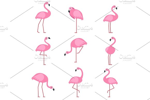 Cartoon Pictures Of Exotic Pink Bird Flamingo Vector Illustrations Isolate