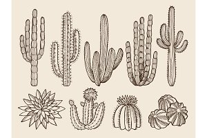 Sketch hand drawn illustrations of cactuses and various wild plants