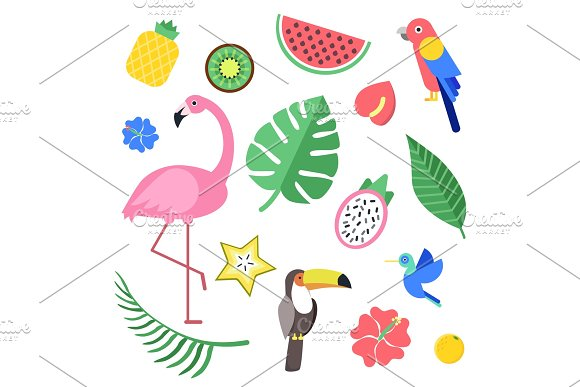 Flowers And Tropical Exotic Fruits And Birds Vector Illustrations Isolate