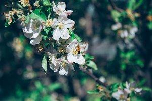 Blossom Bee