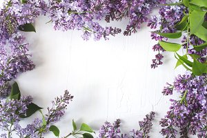 Lilac blossom background