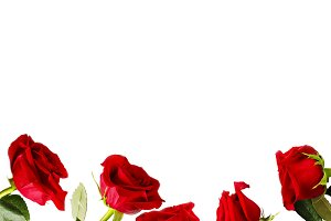 Fresh red roses background