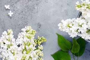 Background with white lilac