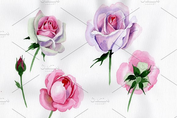 Pink Rose Watercolor Flower PNG