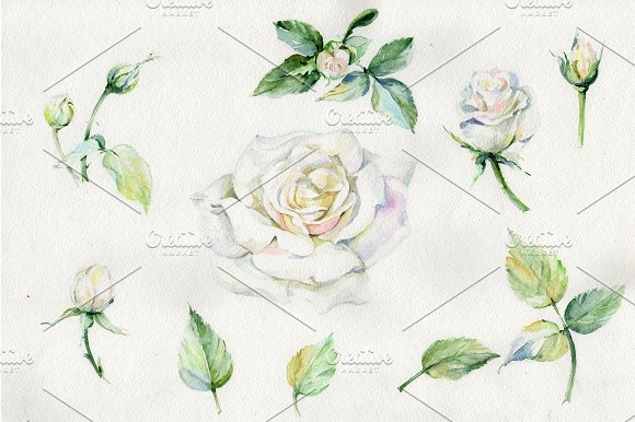 White Rose Watercolor Flowers PNG