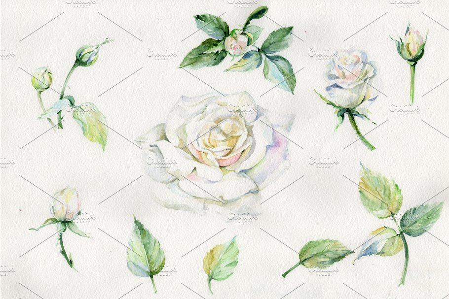 White Rose Watercolor Flowers Png Illustrations Creative Market