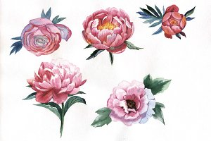 Red peony watercolor flower PNG
