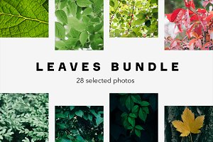 Leaves Bundle