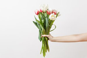 Bright bouquet of white and pink spring tulips with yellow centers in female hand isolated on white background. Celebration, St. Valentine's Day International Women's Day birthday holiday concept.