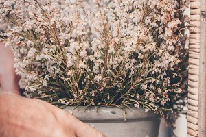 Potted white heather flowers