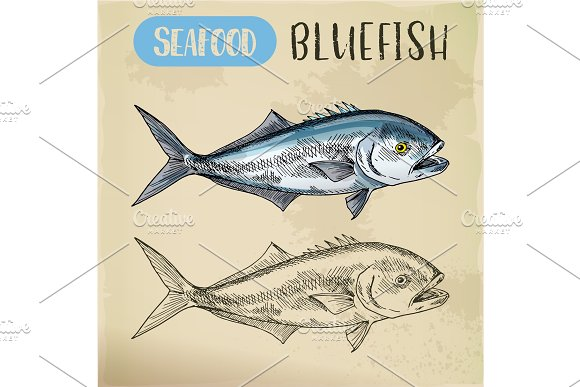 Seafood Sketch Of Bluefish Sign