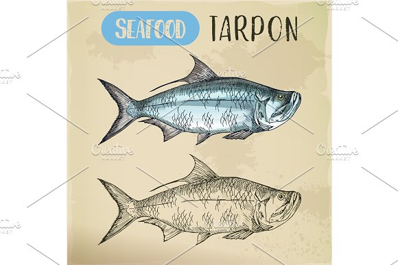 Tarpon Sketch For Shop Or Store Signboard