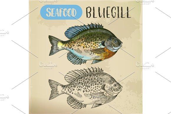 Bluegill Sketch Or Hand Drawn Seafood