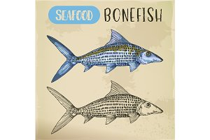 Bonefish sketch or hand drawn seafood