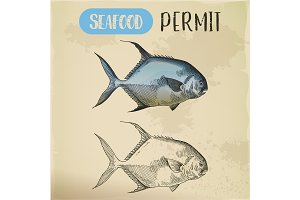 Sketch of permit or game fish. Seafood