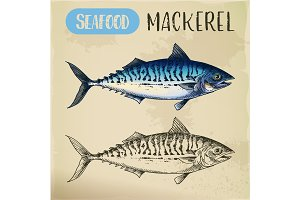 Mackerel hand drawn signboard for fish store