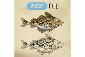 Sketch of atlantic or pacific cod, fish or seafood