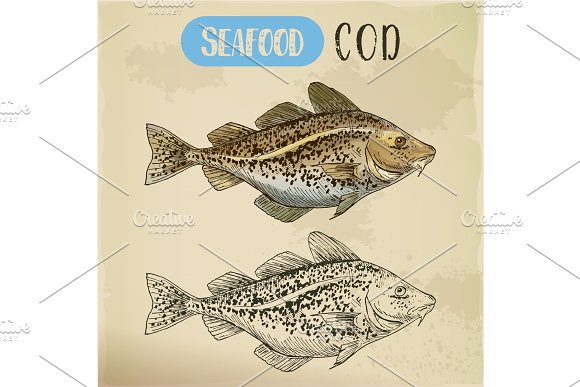 Sketch Of Atlantic Or Pacific Cod Fish Or Seafood