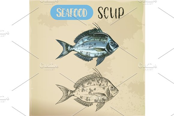 Side View On Scup Or Porgy Fish Seafood Sketch